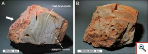 "Figure 3: Specimen of 3.443 Ga Strelley Pool Chert from the Pilbara region, Western Australia showing well defined stromatolitic texture (A) and mineral cavities or ""vugs"" (B). Image credit: Derek Pullan"